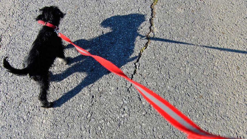 In Felsspalte gefangener Hund nach fünf Tagen Martyrium gerettet