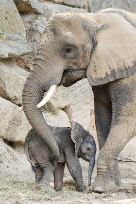 Kibali kurz nach ihrer Geburt mit Mutter Numbi.