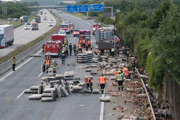 Tausende Tiere waren bei dem Unfall im Frühverkehr verendet.