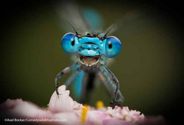 """Fotografiert von Axel Bocker mit dem Titel """"Don't worry. Be happy!"""""""