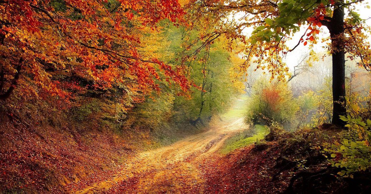 Das-gro-e-Herbst-Quiz-Wie-gut-kennen-Sie-sich-mit-der-bunten-Jahreszeit-aus-