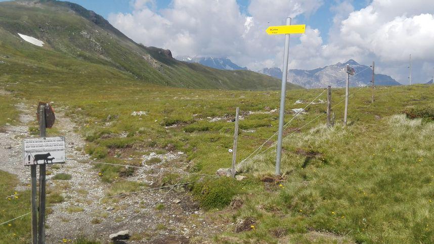 Besitzstörung: Wandertafeln müssen nach Kuh-Attacken von Alm