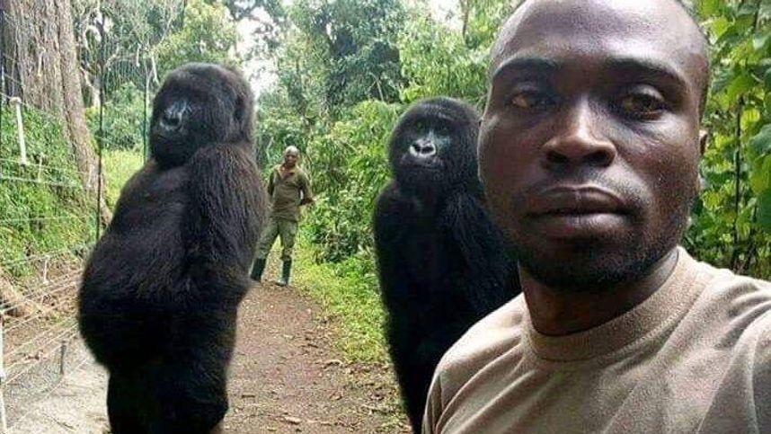 Berühmter einarmiger Gorilla in Demokratischer Republik Kongo ist tot
