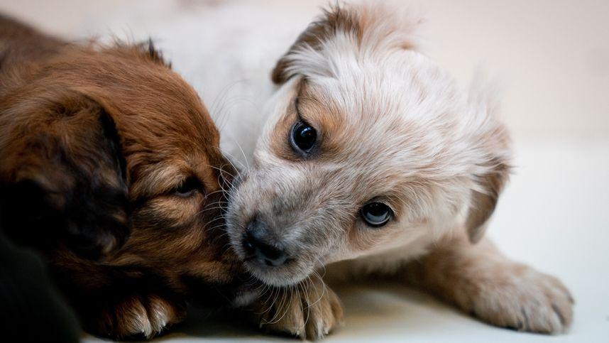 Hund meinem habe es ich getrieben mit Deutscher Schweißhundeverband