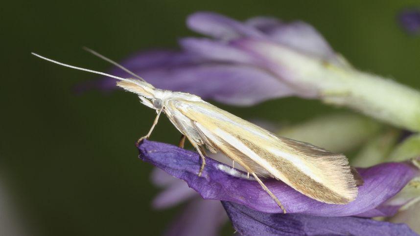 460 Schmetterlingsarten an einem Tag im Naturpark Kaunergrat entdeckt